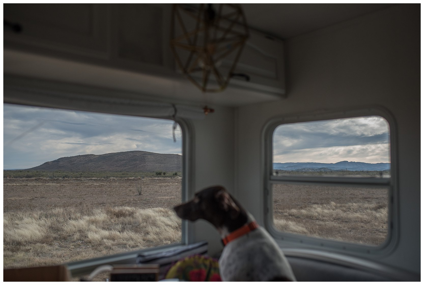 Dog looking out the window of a camper
